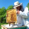 Είδη Μελισσοκομείας