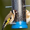Για Ωδικά Πτηνά